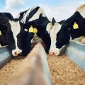 Различные корма для коров