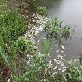 В Андрушівському районі загинуло риби на 153 тис. грн. ФОТО