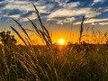 Якою буде погода у Житомирі та області на початку літа?