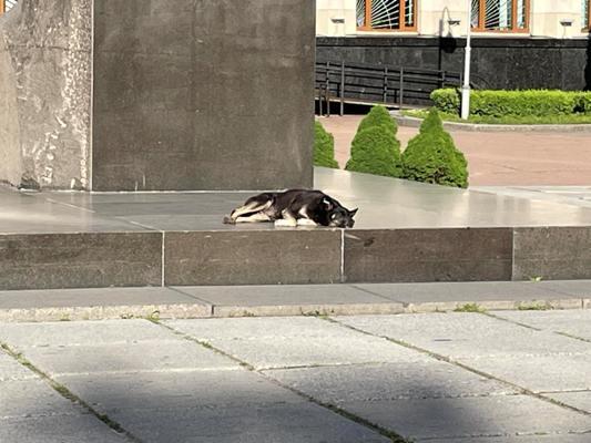 Хто  стереже пам'ятник Корольову у Житомирі? ФОТО