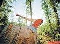 У Бердичівському районі чоловік зрубав 15 дерев