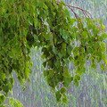 Дощі та грози йтимуть по всій Україні