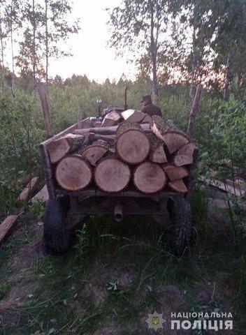 На Житомирщині зафіксували три випадки перевезення нелегальної деревини. ФОТО