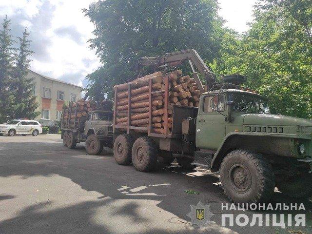 На Малинщині біля пилорами зупинили вантажівки з нелегальним лісом. ФОТО