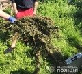 На Житомирщині в чотирьох жителів видучили наркотики. ФОТО