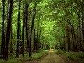 На Житомирщині підприємство намагалося вилучити 7,5 га землі лісового фонду