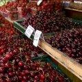 У Житомирі на ринку кілограм черешні коштує не менше 70 гривень – експерти пояснюють чому. ВІДЕО