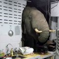 В Таиланде слон проломил стену кухни ради мешочка риса