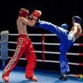 У Житомирі пройде чемпіонат області з кікбоксингу