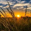 30 червня народне свято: прикмети, традиції та звичаї