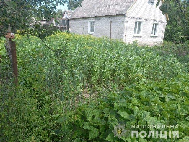 У Житомирському районі виявили незаконні посіви снодійного маку. ФОТО