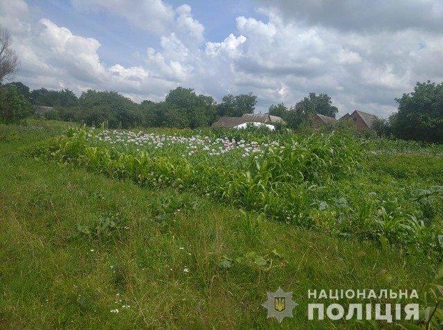 На Чуднівщині у жінки на городі виявили близько 1400 рослин маку. ФОТО