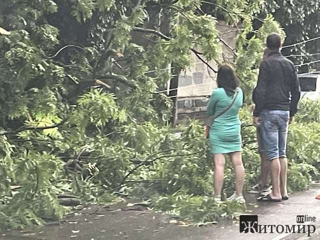 Велика аварія на Фещенка-Чопівського у Житомирі. ФОТО