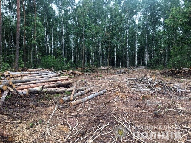 На Житомирщині затримали ЗІЛ, що перевозив нелегальну деревину. ФОТО