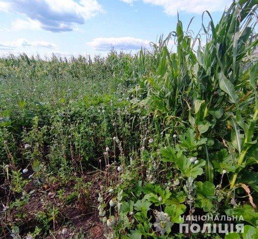 На Житомирщині в двох жительок виявили нарковмісні рослини. ФОТО