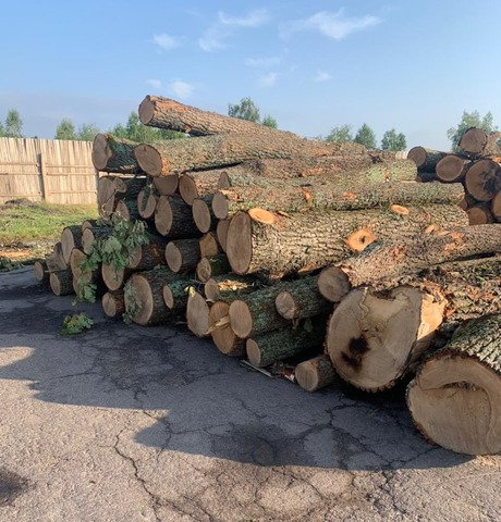На Житомирщині викрили лісобізнесменів, які вирубали майже 840 дерев. ФОТО
