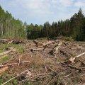 На Житомирщині судитимуть колишнього майстра лісу Коростенського лісгоспу