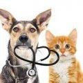 У житомирському Центрі захисту тварин розповіли про нові ветеринарні послуги та ціни