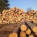 У Новоград-Волинському районі затримали вантажівку з нелегальною деревиною