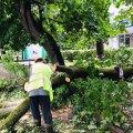 З наслідками ураганного вітру вже борються комунальні служби