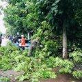 Житомирянин, що постраждав від вчорашнього урагану, знаходиться в реанімації