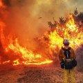 На Житомирщині попереджають про надзвичайну пожежну небезпеку