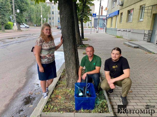 """У Житомирі КП """"Зеленбуд"""" вакцинує каштани. ФОТО"""