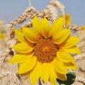 Синоптики попередили про спекотний серпень: якої погоди чекати