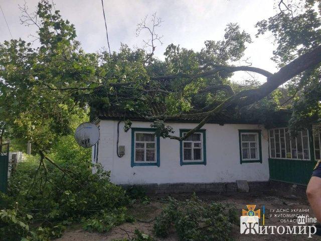 На Житомирщині рятувальники прибирали повалені дерева. ФОТО