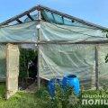 На Житомирщині в пенсіонера виявили наркоплантацію. ФОТО