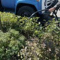 У Житомирі комунальники поливають газони біля доріг. ФОТО