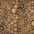 Жителя Коростишева судитимуть через нелегальну деревину