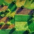 Кабмін озвучив середню ціну за гектар землі