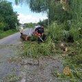 На проїжджу частину в Житомирській області спало дерево і перекрило рух транспорту. ФОТО