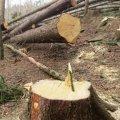 На Житомирщині розслідують черговий факт незаконної порубки лісу