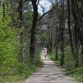 Під Житомиром проклали лісову стежку у формі карти України для бігу та прогулянок