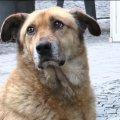 У Житомирі втретє рахуватимуть безпритульних собак і запрошують волонтерів