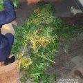 У Коростені в автомобілі чоловіка виявили нарковмісні рослини. ФОТО