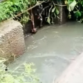 Нечистоти з житомирського водоканалу знову потрапили у річку Тетерів