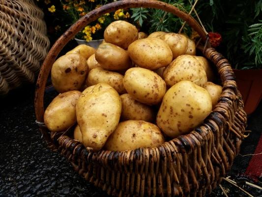 Картопляні хитрощі з Овруча