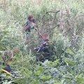 Малинські рятувальники витягнули з болота чоловіка, який там застряг та самостійно не зміг вибратись