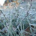 У Житомирі та області протягом тижня очікуються перші заморозки