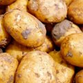 Фермери розвіяли паніку з приводу дефіциту картоплі в Україні