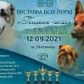 У Житомирі відбудеться всеукраїнська виставка собак