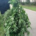 У Житомирському районі в чоловіка виявили нарковмісні речовини. ФОТО