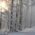 Синоптик дала прогноз погоди на зиму в Україні