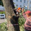 Житомирський підрядник пояснив, чому в сквері на розі вулиць Театральної та Великої Бердичівської зрізали дерева. ФОТО