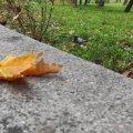 У Житомирі та області синоптики прогнозують дощову й прохолодну погоду