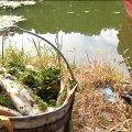 У Житомирі зафіксували масовий мор риби
