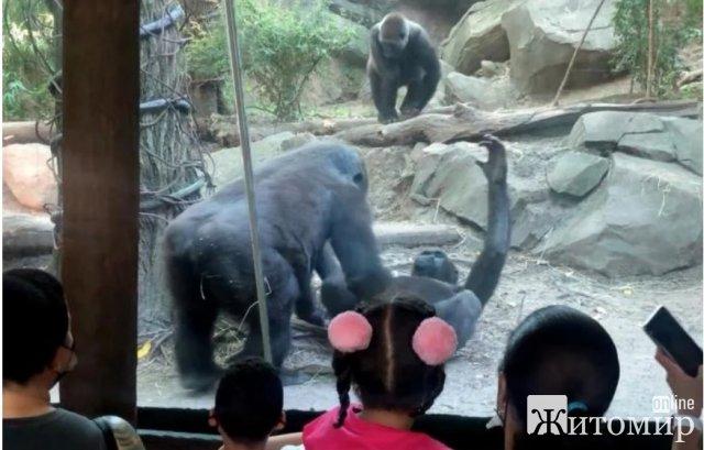 У нью-йоркському зоопарку мавпи зайнялися оральним сексом, батьки відвертали дітей від вольєра